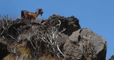 La ganadería; lo primario y lo principal