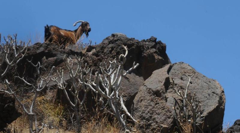 Cabildo y ganaderos de La Gomera analizan la situación del sector en la Isla
