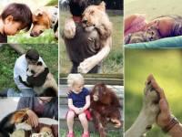Enamorarse como un animal
