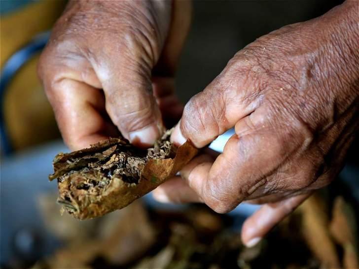 El tabaco es otra planta sagrada de esta comunidad indígena. Múrui Muina significa: 'gente de tabaco, coca y yuca dulce'.