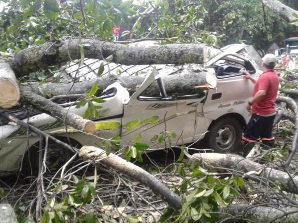 Caída de un árbol mató a cinco personas