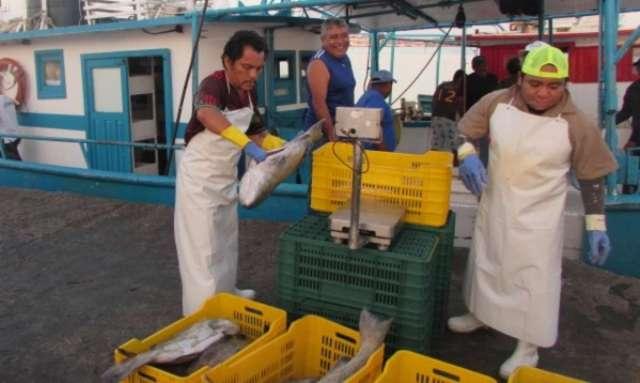 COFEPRIS afecta a exportaciones