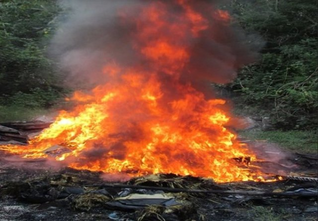PGR Yucatán destruye: pepino de mar, tragamonedas, apócrifos e incinera droga