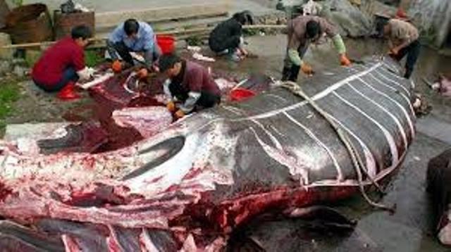 Japón retoma en 2019 la caza masiva de ballenas
