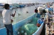 Demanda de sardina