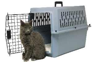Transportín-gato al veterinario