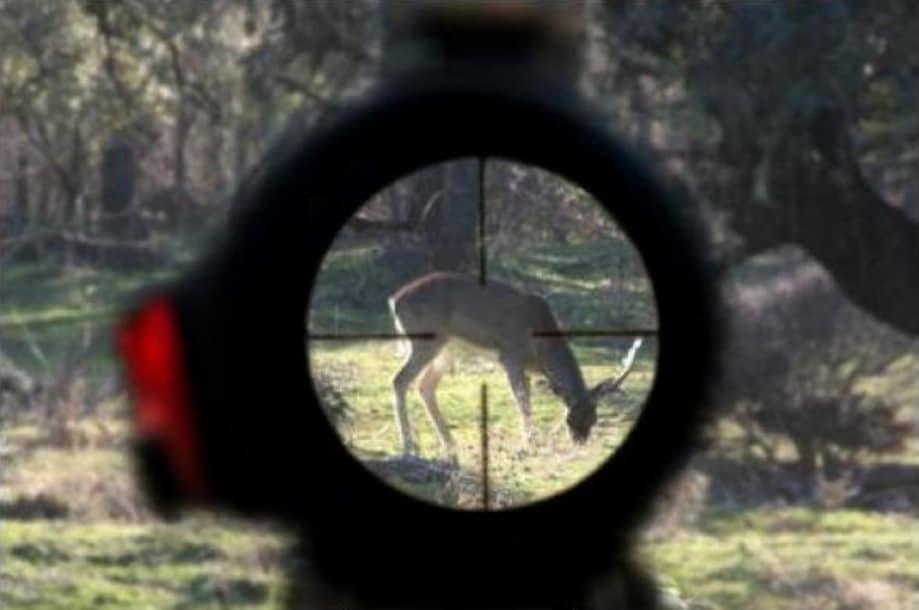 Abolir la caza en España