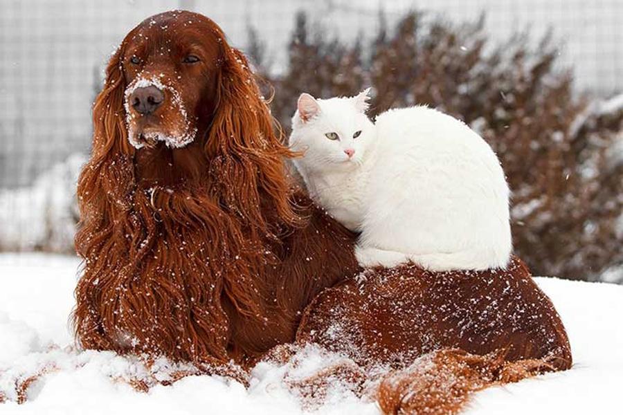 protege a tus mascotas del frío