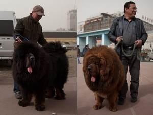 Perros abandonados