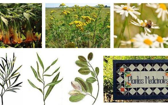 Plantas Medicinales
