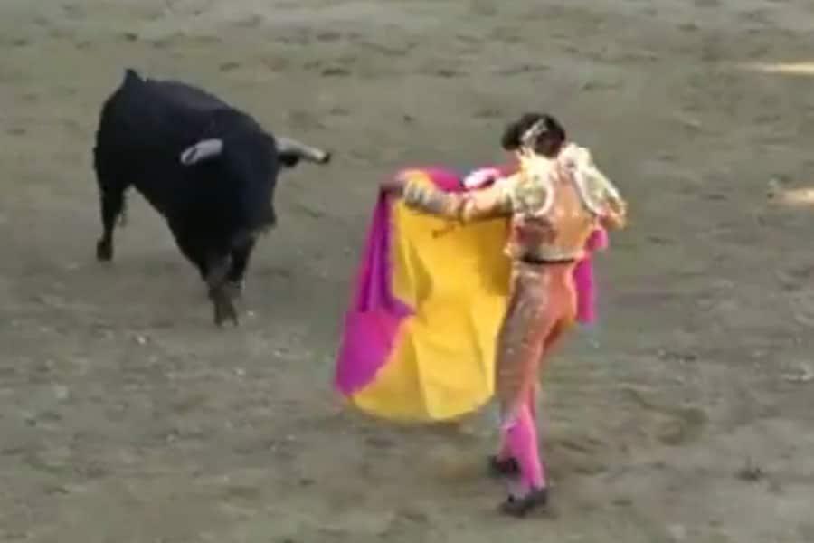 Ivan Fandiño ¿Se deben prohibir las corridas de toros en España?