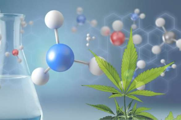 CANNABIDIOL, un remedio natural para nuestro organismo.