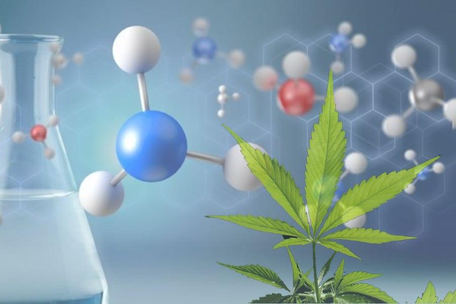 CANNABIDIOL, un remedio natural para nuestro organismo.