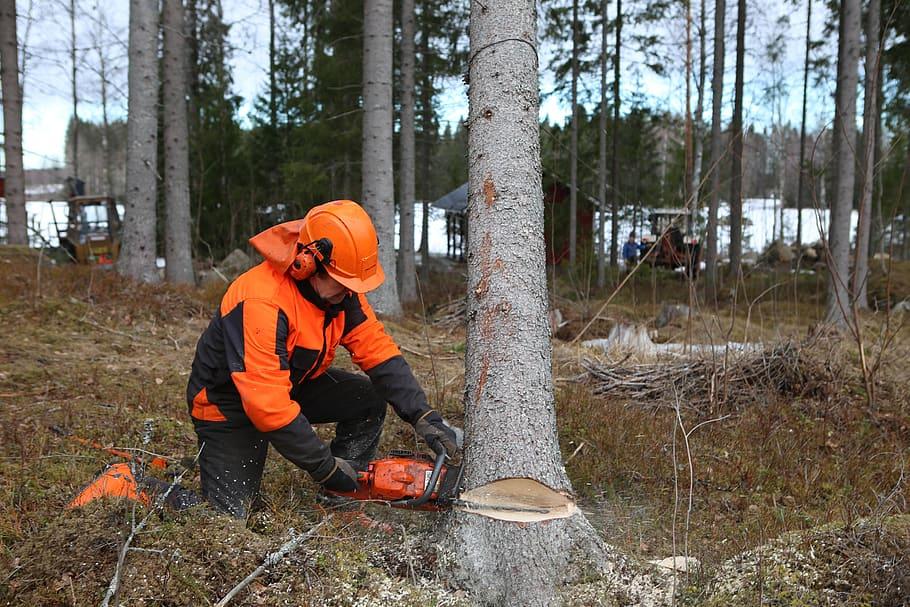 Consejos para talar árboles con seguridad