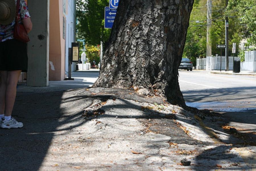 Cuándo debe realizarse una tala de árboles selectiva-1