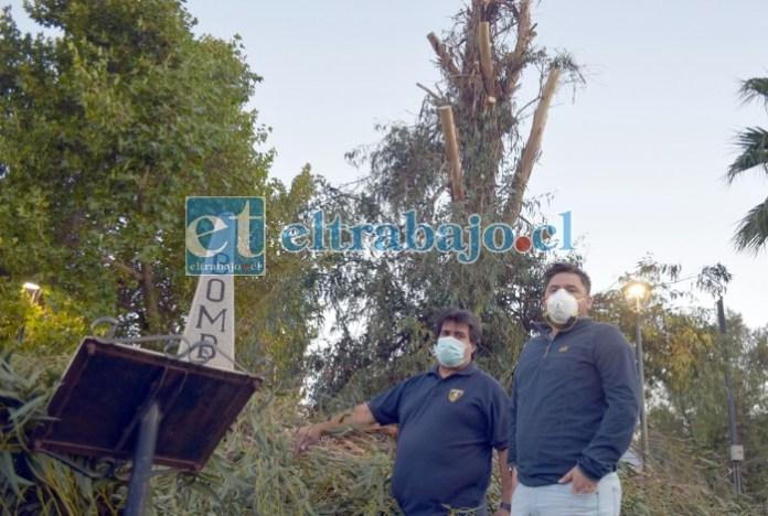SIN SOMBRA EN LA PLAZA.- El propio superintendente de Bomberos David Guajardo y demás personal bomberil muestran a Diario El Trabajo los trabajos de tala en su querida plaza.