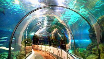 Barcelona con niños Aquarium