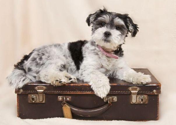 Qué hacer con nuestro perro en vacaciones