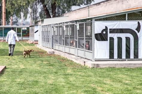Perros ayudan a rehabilitar a otros peludos rescatados en el Metro