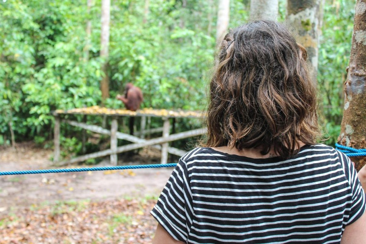orangutanes-en-borneo-17