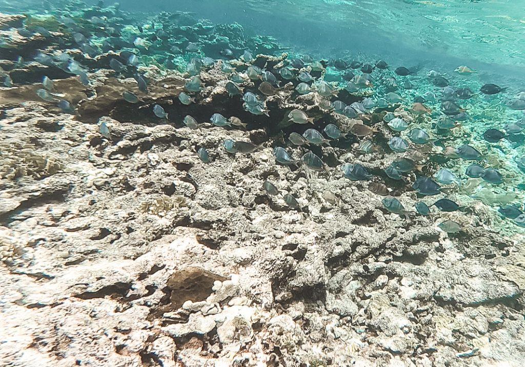 Snorkel en Belice