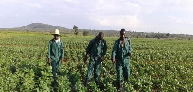 Grow nueva visión para la agricultura