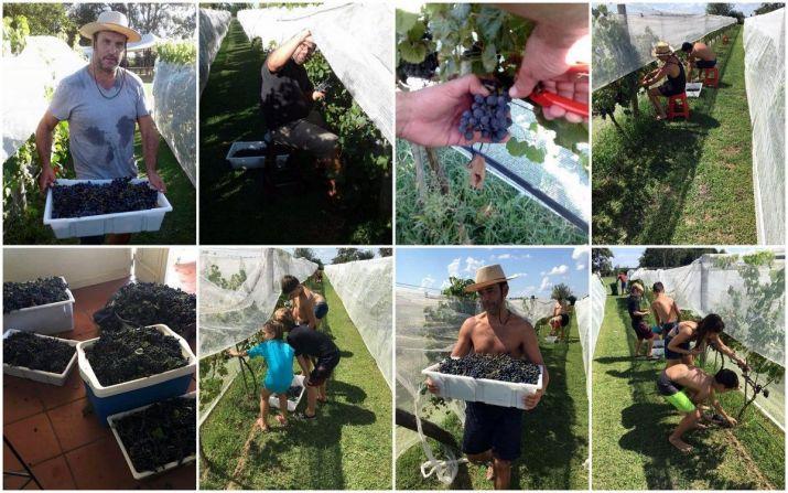 Día de cosecha en Finca Las Antípodas