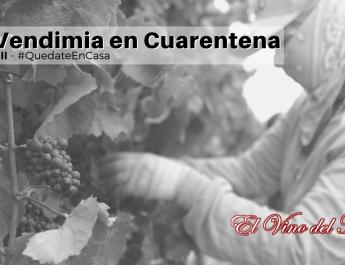 La Vendimia en Cuarentena parte II