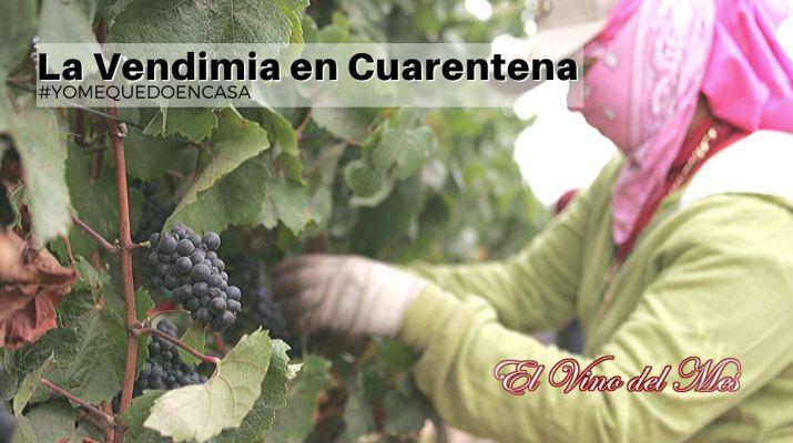 La Vendimia en Cuarentena