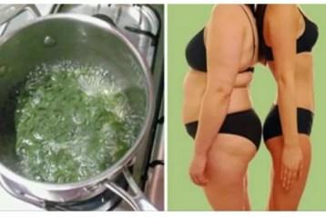 salsinha ou salsa para emagrecer