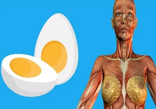 beneficios de comer ovos