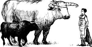 Aurochs, cattle, human sketch for scale