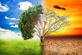 Clima organizzativo: fa freddo, caldo o tiepido?