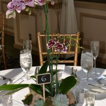 1000 Ideas About Potted Plant Centerpieces On Emasscraft Org