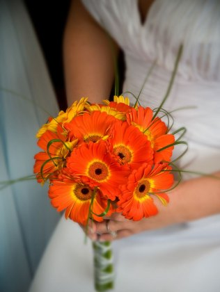 1000 Images About Gerbera Daisies On Emasscraft Org
