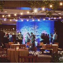 James And Crystal Shimmery » Aves Photography