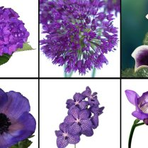 Purple Wedding Flowers Six Gorgeous Kinds 2