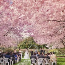 17 Best Images About Cherry Blossom Wedding Ideas On Pinterest