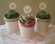 Reserved For Melefterion, 220 Succulent Plant Wedding Favors