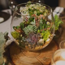 Best 25 Terrarium Centerpiece Ideas On Emasscraft Org