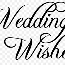 Wedding Invitation Script Typeface Calligraphy Font