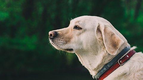 Cane-Ematik-cura delle ferite animali