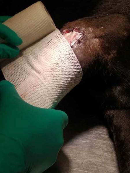 bandage - how to treat a wound from mass removal