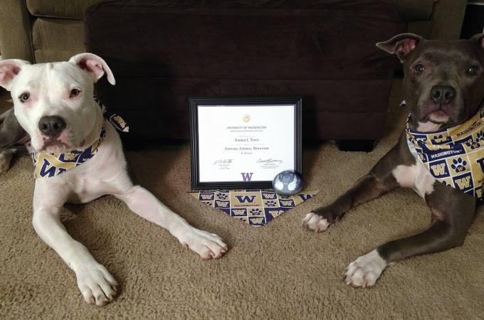 The Educated Dog Trainer