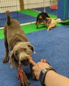 puppy classes bellingham wa