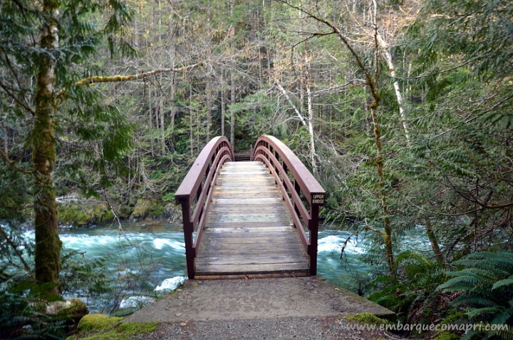 little-qualicum-falls4