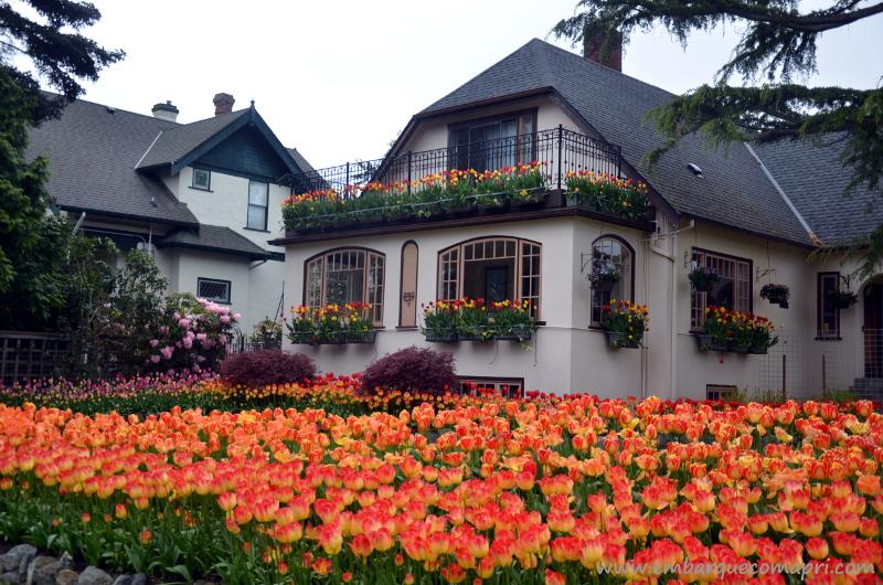 Casa com mais de 8 mil tulipas vira atração turística no Canadá!