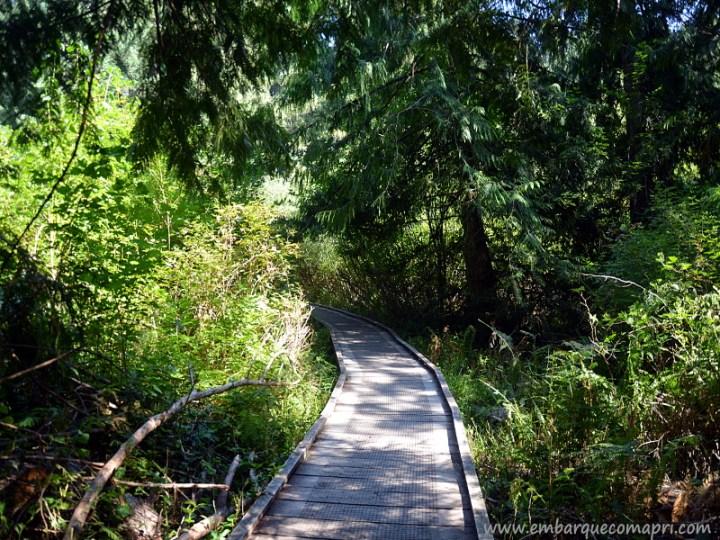 Ponte de madeira no Parque Regional Mount Work durante o verão