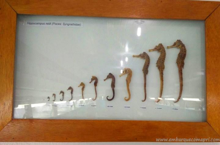 Projeto Hippocampus