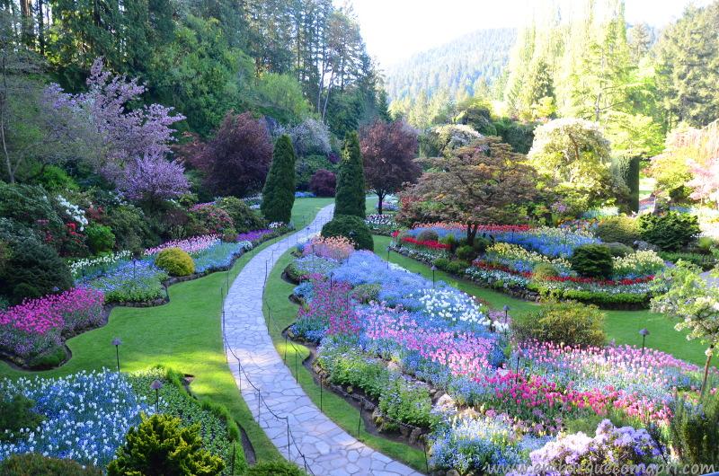 Temporada das tulipas em um dos parques mais lindos do Canadá!